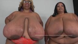 Les super grosses blacks Norma Stitz et Cotton Candi remuent leurs énormes seins - Vidéo porno hd